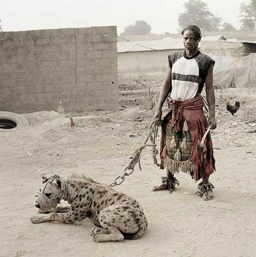 Pet Hyena
